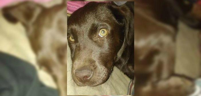 Euthanized Dog at Texarkana Shelter Alleged Act of Disgruntled Employee