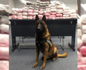 I-30 Traffic Stop Results in Discovery of 64 Pounds of Weed