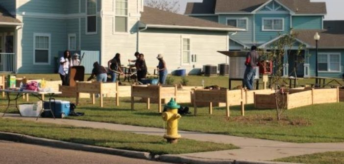 New Community Gardens Open for All to Grow Vegetables and More
